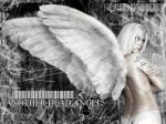 angel7_1024 - [KZKG^Gaara]